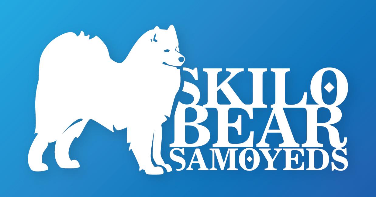 Skilo Bear Samoyeds